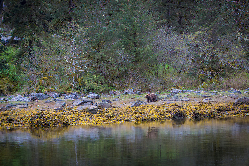 Fuzzy the Grizzly Bear in the colours of the estuary