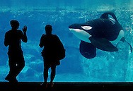US-ORLANDO-Seaworld. PHOTO: GERRIT DE HEUS.VS - Orlando - Seaworld. COPYRIGHT GERRIT DE HEUS