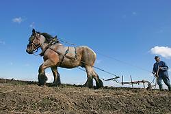 Reportage - Ploegen met paard<br /> Photo© Dirk Caremans