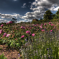 The Rose Garden at Polesden Lacy