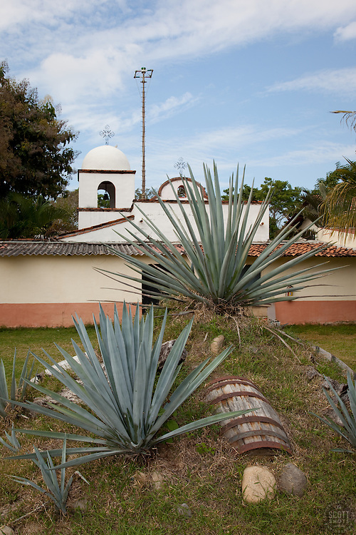 """Buried Barrel""- This buried barrel and agave plants, used in the making of tequila, were photographed near Puerto Vallarta, Mexico."