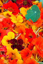 Picked nasturtiums