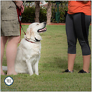 Cadence K-9 provides training for your best dog!