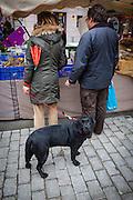 A dog in Puigcerda