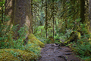 Hoh Rainforest; Olympic National Park, Washington
