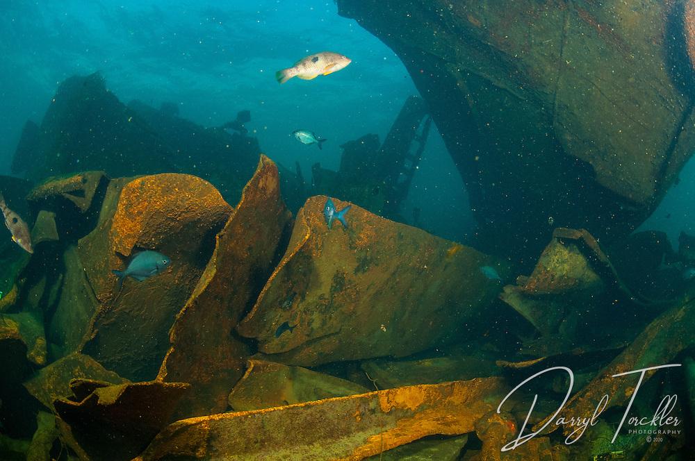 Underwater view In the Rena wreckage debris field in 2013. Astrolabe reef, Tauranga. New Zealand