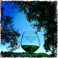 2013 May 13:  Williams Selyem Winery in Sonoma County's Russian River Valley.  Healdsburg, California.  iPhone, Hipsta photo.  Red wine glass outdoors.