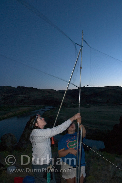 Forest Service biologist Pat Ormsbee (left) and Aimee Hart set up mist nets at the Clarno Cliffs to capture bats for a bat survey. Near Clarno, Oregon.