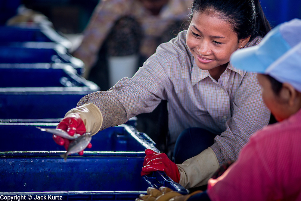 30 OCTOBER 2012 - PATTANI, PATTANI, THAILAND: Cambodian workers sort and grade fish in the fishing port of Pattani, province of Pattani, Thailand. Thailand's fishing industry relies on immigrant workers, mostly from Myanmar but also Laos and Cambodia. There have been allegations of worker abuse, including charges that workers are held in slave labor like conditions.  There are hundreds of thousands of immigrant workers in the Thai fishing industry. Most are from Myanmar (Burma) but there are also Cambodian and Laotian workers in the industry.    PHOTO BY JACK KURTZ