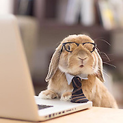 Meet the world's most stylish bunny: Adorable rabbit wins thousands of fans online for his VERY impressive wardrobe<br /> <br /> While Insta-famous dogs and cats are commonplace on social media, one very stylish rabbit is now making a name for himself.<br /> PuiPui, an adorable Holland Lop bunny from Tokyo, boasts over 24,000 followers on Instagram, and it's not difficult to see why. <br /> The chic rabbit is often snapped living it up in very intricate outfits and costumes<br /> <br /> 'The most stylish bunny in the world,' Mumitan has written on her Instagram bio. <br /> 'I make all the costumes for my bun.' <br /> Snaps of PuiPui show him dressed up in an array of creative costumes - from Sherlock-inspired get-ups to a corporate look complete with a tie and glasses. <br /> ©Mumitan/Exclusivepix Media