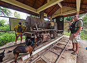 Laos, Champasak Province. Four Thousand Islands.Don Khone. Visitors and goats at the French locomotive museum.