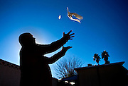 Tony Sosa releases one of his pigeons for training from his backyard near the coop he maintains for high-stakes pigeon racing as a member of Silver State Pigeon Racing on Friday, December 18, 2015.  L.E. Baskow