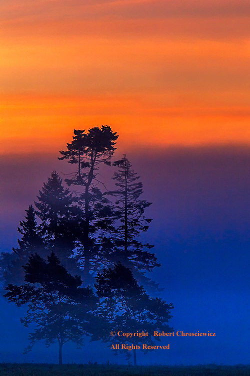 Reversed Sunrise: The early morning colours suggest a reversal as a silhouetted forest stands draped in a heavy fog, while above the sky is set in an orange cast, Surrey British Columbia, Canada.