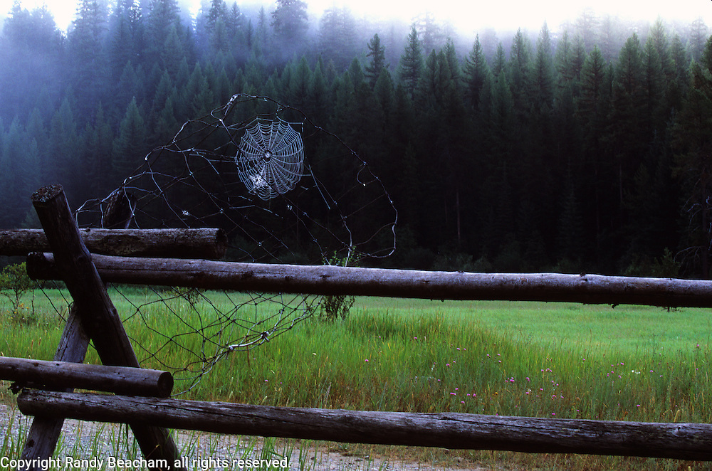 Spider web on fence. Yaak Valley, Montana