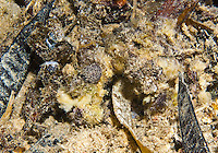Guam Night Diving, Fish, Invertebrates, Micronesia. Marine Preserves