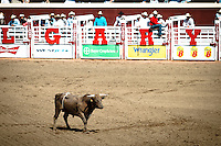I love the rodeo at the Calgary Stampede and I attend every year. It's a really great show and there are always fantastic sights and sounds...©2010, Sean Phillips.http://www.RiverwoodPhotography.com