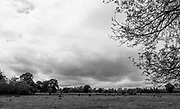 "Maidenhead, United Kingdom.  ""General View looking over towards Cookham Village"", Cookham Reach, River Thames between Boulters Lock and Lower Cookham, view from the riverside path, <br /> <br /> Friday  22/05/2015<br /> <br /> © Peter SPURRIER<br /> Panasonic  DMC-LX100  f5.6  1/1250sec  28mm  3.8MB"