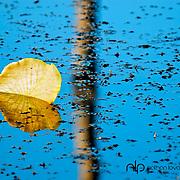 Lily pad reflection on blue water;  Minnesota.