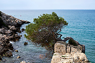 Spanish coast with rocks and a pine-tree near Salou.