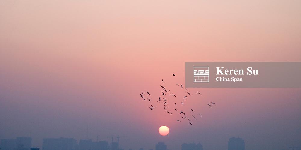 Birds at sunset sky, Beijing, China
