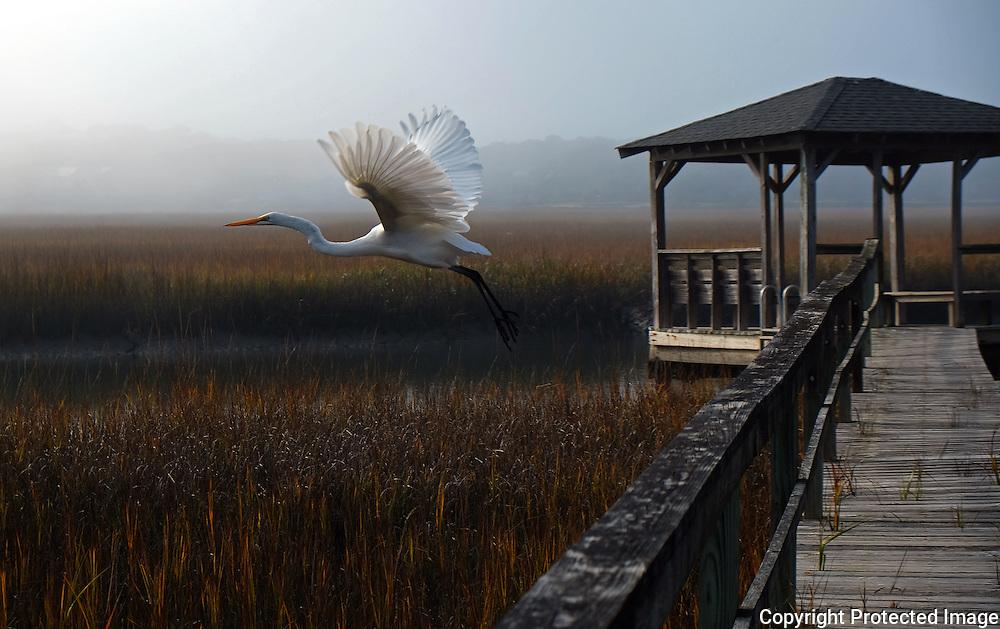 Pawley Island, South Carolina  Photo by David Peterson - An egret flies over a marsh in Pawley Island, South Carolina.
