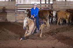 April 29 2017 - Minshall Farm Cutting 1, held at Minshall Farms, Hillsburgh Ontario. The event was put on by the Ontario Cutting Horse Association. Riding in the 250 Novice Rider Class is Lisa Mayer on Paldur Puff owned by the rider.