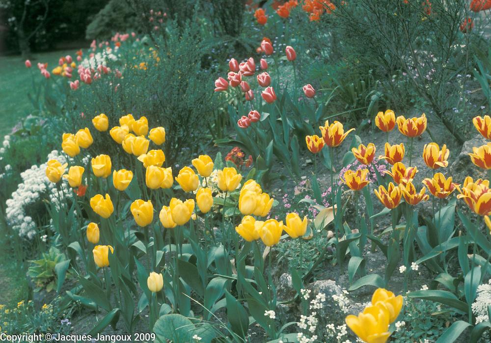 Tulip spring garden in Belgium.