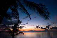 A Mauritius sunset through silhouetted palm trees.  Mauritius,  The Indian Ocean