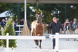 Lars Petersen, (DEN), Mariett - Horse Inspection Dressage - Alltech FEI World Equestrian Games™ 2014 - Normandy, France.<br /> © Hippo Foto Team - Leanjo de Koster<br /> 25/06/14