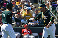 MESA, AZ - MARCH 09:  Stephen Vogt #21 of the Oakland Athletics is congratulated by Yonder Alonso #17 after scoring against the Cincinnati Reds  in the second inning of the spring training game at HoHoKam Stadium on March 9, 2017 in Mesa, Arizona.  (Photo by Jennifer Stewart/Getty Images)