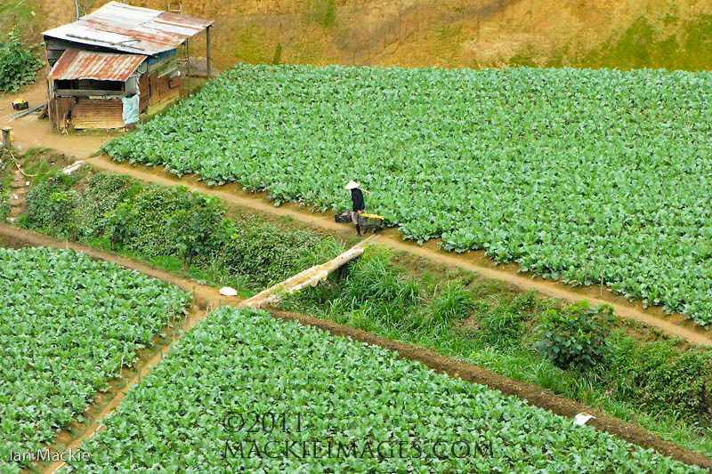 Dalat - the vegetable capital of Vietnam