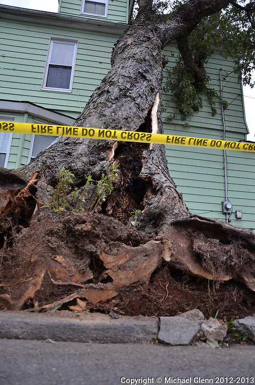 93 street and Foster Ave. 2 trees along sidewalk fell on a house on the corner. injuries unknown. House unnoccupied