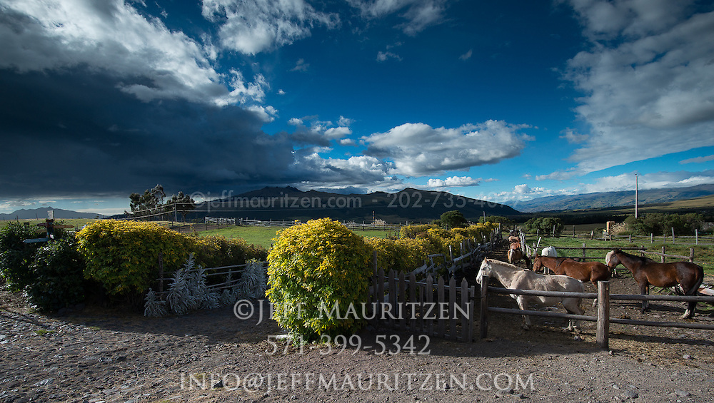 Horses on a hacienda high up in the Andean highlands of Ecuador.