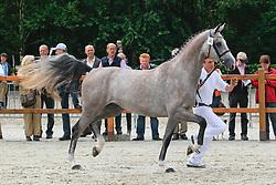 043 - Cirkit<br /> KWPN Paardendagen 2010<br /> © Hippo Foto - Leanjo de Koster