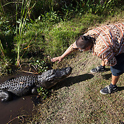 Johny Tigertail hand feeds and talks to an adult alligator in the Florida Everglades