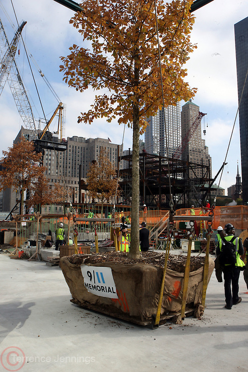 26 October 2010- New York, NY- The 50th Tree at The 50th Tree Planting Ceremony held at the World Trade Center Ground Zero. Photo Credit: Terrence Jennings