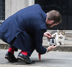 Downing Street, London, October 25th 2016. Larry the Downing Street cat is photographed by Sky News's Darren McCaffrey outside10 Downing Street as the cabinet meeting takes place with the announcement that the construction of a third runway at Heathrow Airport has initial government approval.