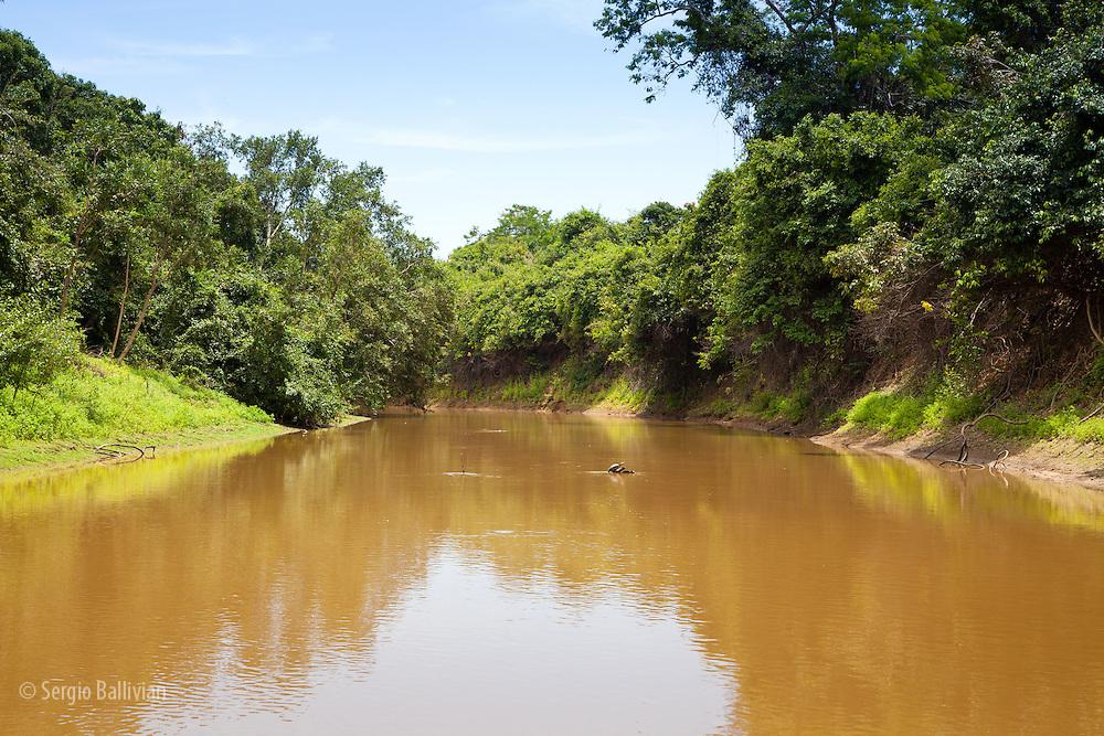Rio Yacumo, in the pampas of the Beni, Bolivia.