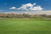 Wheat fields near Terry Montana
