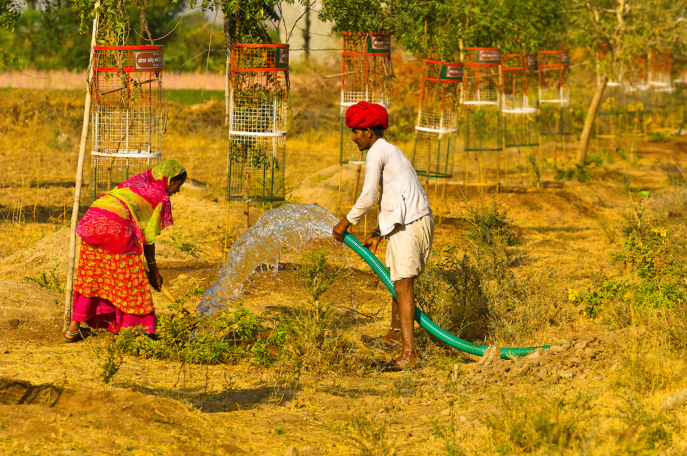 Man and woman irrigating plants in the desert, near Rohet, Rajasthan, India