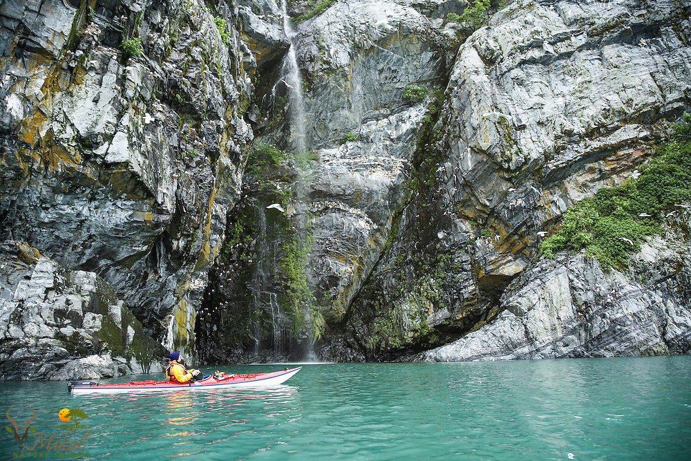 Kayaker looking up at Kittiwake Colony, Prince William Sound, Alaska