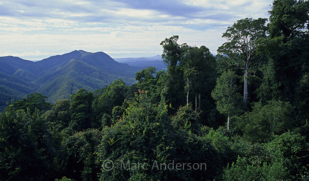 Rainforest & hills in Dorrigo National Park, NSW, Australia..