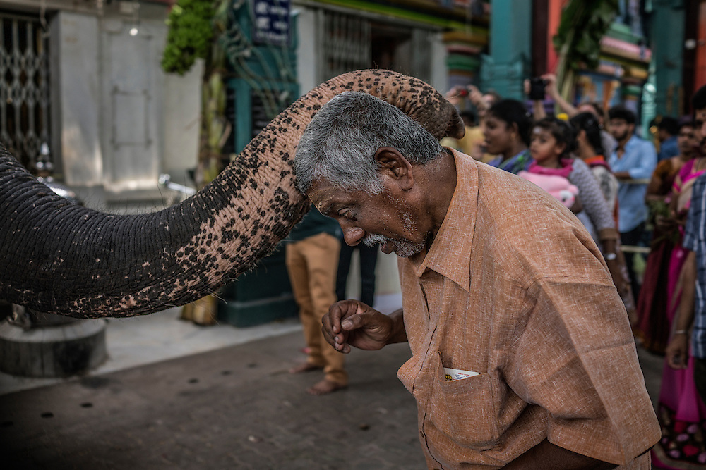 A local man tentatively receives a blessing from a temple elephant, a stand in for Ganesha, at the Ganesh Chaturthi Festival at Arulmiga Manakula Vinayagar Temple.  Pondicherry, India.