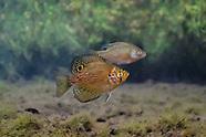 Flier, Underwater