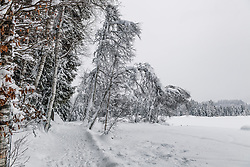 THEMENBILD - Ein Winterwanderweg rund um den Schwarzsee, aufgenommen am 10. Jänner 2019, Kitzbuehel, Oesterreich // A winter hiking trail around the Schwarzsee at Kitzbuehel, Austria on 2019/01/10. EXPA Pictures © 2019, PhotoCredit: EXPA/ Stefan Adelsberger