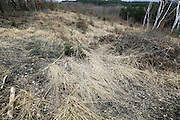 flat laying brown tall grasses on open spot in woodland