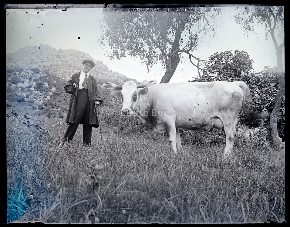 young farmer proudly posing with a milk cow France circa 1920s