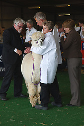 Judging Alpacas at Newark Show 2009