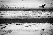 Aalesund III