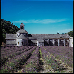 2015 July - Lavender fields